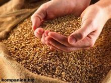 Оптимизирована работа зерновой логистики